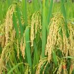 農薬・肥料の管理、繁殖経営管理のフリーソフト/エクセル
