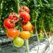 農業日誌、農作業記録、家庭菜園のフリーソフト/エクセル